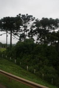 nath-curitiba-061
